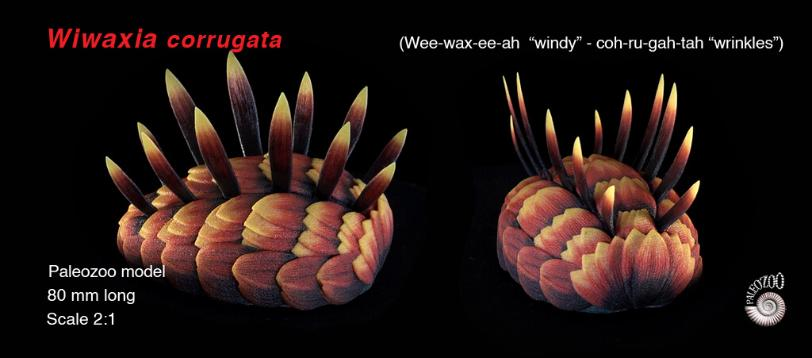 Wiwaxia corrugata model anterior view from Paleozoo by Bruce Currie